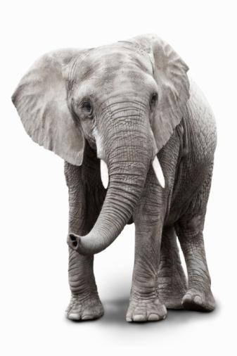 Elephant「elephant」:スマホ壁紙(4)