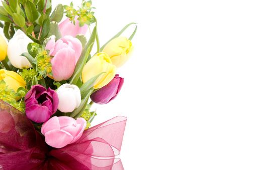 Tulip「Tulips」:スマホ壁紙(17)