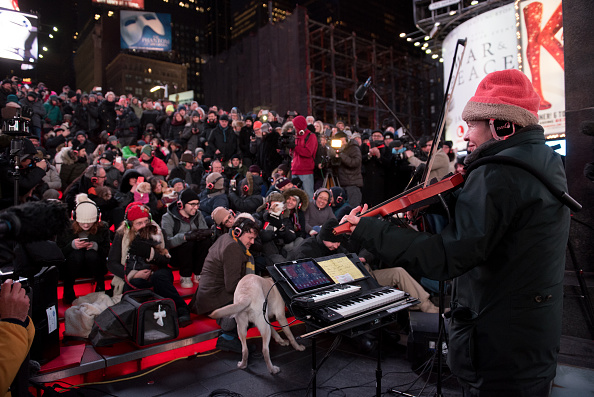 Vertebrate「January Midnight Moment Concert For Dogs: Heart Of A Dog By Laurie Anderson」:写真・画像(2)[壁紙.com]