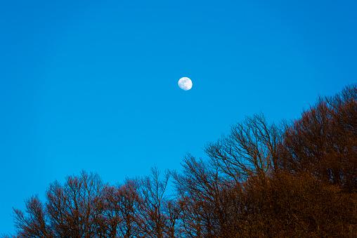 月「Moon against blue sky」:スマホ壁紙(2)