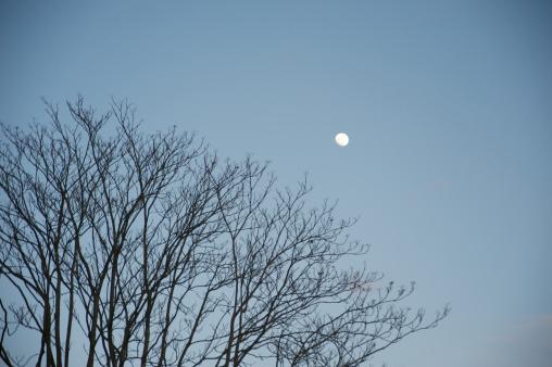 月「Moon against blue sky and a bare tree」:スマホ壁紙(16)