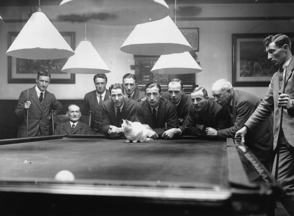 Animal「Snooker Cat」:写真・画像(19)[壁紙.com]