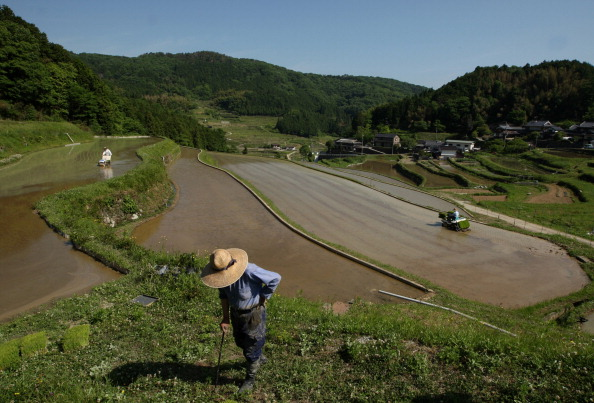 Rural Scene「Planting Begins At Rice Terrace」:写真・画像(19)[壁紙.com]