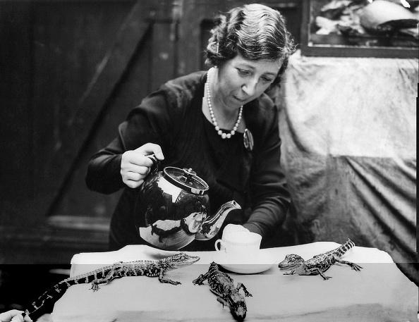 動物「Alligators For Tea」:写真・画像(7)[壁紙.com]