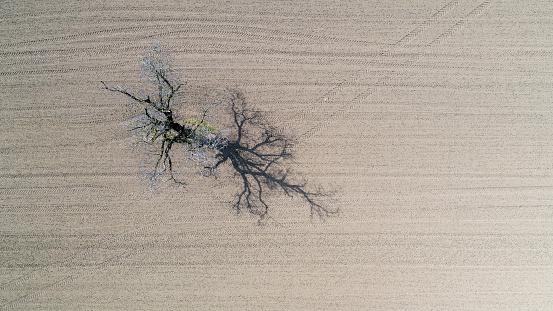 Vaud Canton「Tree in field, Genolier, Vaud Canton, Switzerland」:スマホ壁紙(7)