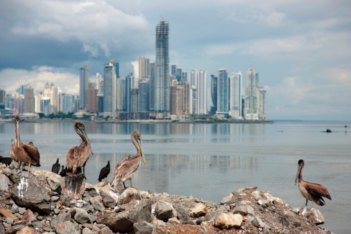 Central America「Panama, Panama City, Pelicans on coastline, skyline in background」:スマホ壁紙(8)
