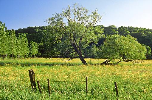 Fallen Tree「buttercups (ranunculus) and fallen trees in meadow france」:スマホ壁紙(9)