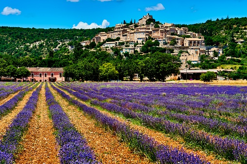 Alpes-de-Haute-Provence「Lavender in Simiane La Rotonde village, Provence」:スマホ壁紙(13)