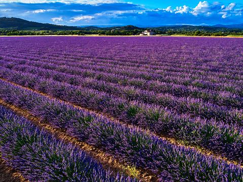Provence-Alpes-Cote d'Azur「Lavender in Provence, France」:スマホ壁紙(18)