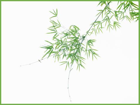 枝「View of bamboo branches」:スマホ壁紙(8)