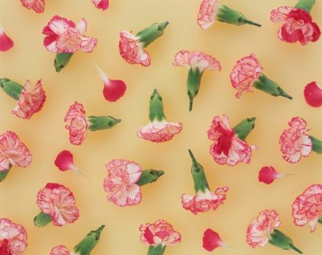 カーネーション「Cluster of carnations」:スマホ壁紙(15)