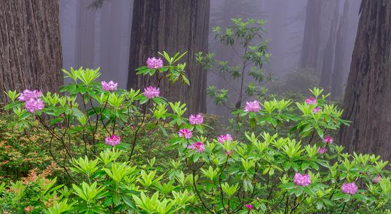 Grove「Redwoods」:スマホ壁紙(10)