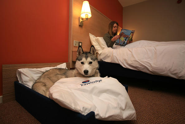 Hotel「Crufts Dogs Get Their Own Beds Thanks To Travelodge」:写真・画像(15)[壁紙.com]