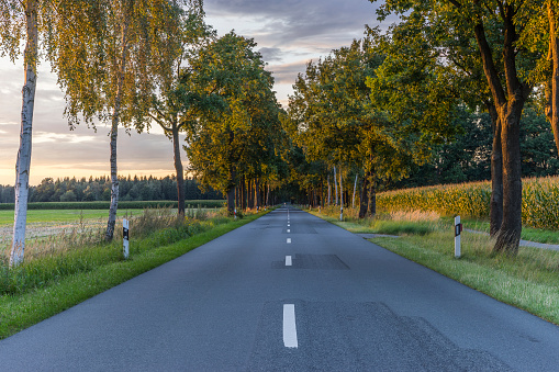 Avenue「Germany, Gifhorn, tree-lined road in the evening」:スマホ壁紙(15)