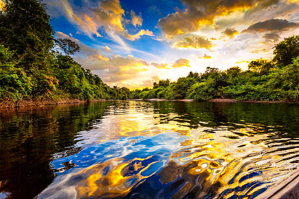 Dramatic landscape on a river in the amazon state Venezuela:スマホ壁紙(壁紙.com)