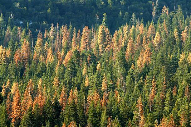 Beetles Bring Devastation And Extreme Fire Danger To Southern California Forests:ニュース(壁紙.com)