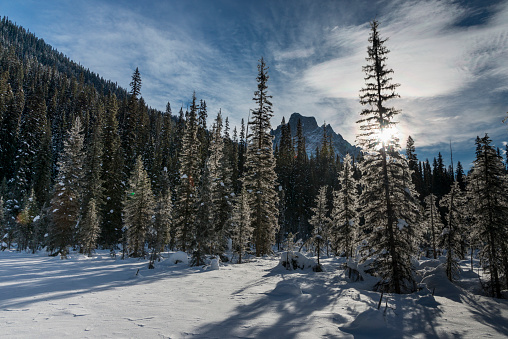 Yoho National Park「Snow on the rugged Canadian Rocky Mountains and trees, Yoho National Park」:スマホ壁紙(13)