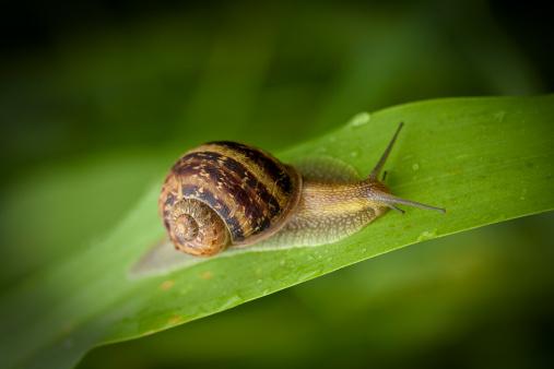 snails「garden snail crawling」:スマホ壁紙(13)
