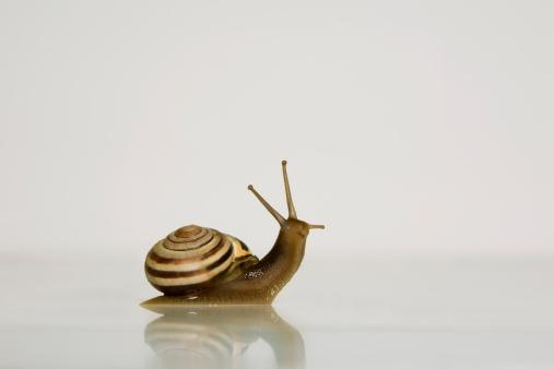 snails「Garden Snail」:スマホ壁紙(0)