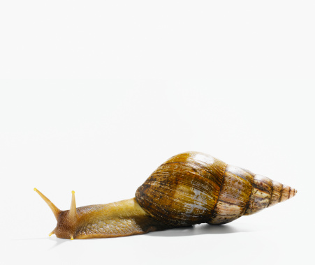 snails「Garden snail, close-up」:スマホ壁紙(12)