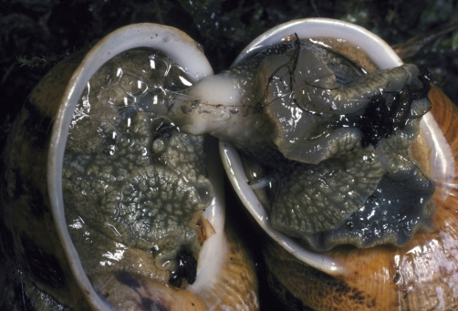 snails「garden snail helix aspersa mating」:スマホ壁紙(7)