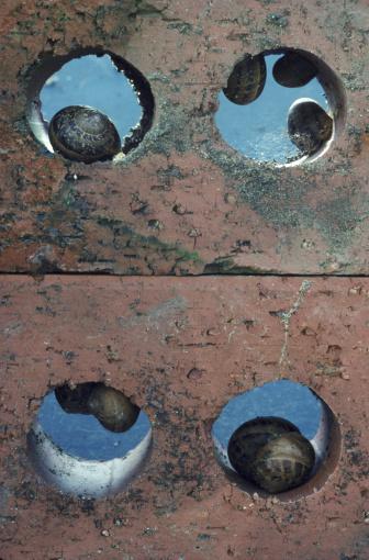 カタツムリ「garden snails helix aspersa hibernating devon」:スマホ壁紙(14)