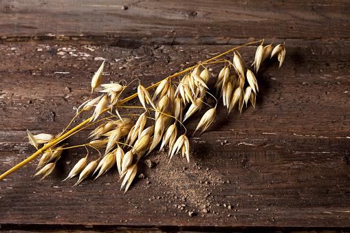 Oats - Food「Ripe spike of oat, Avena, on wood」:スマホ壁紙(17)