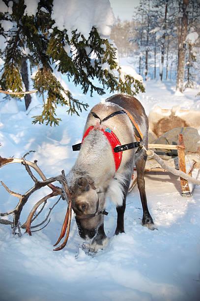 Reindeer and Sleigh:スマホ壁紙(壁紙.com)