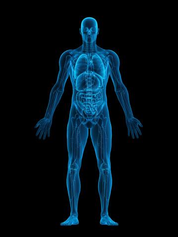 Medical X-ray「Human body X-ray」:スマホ壁紙(18)