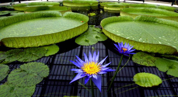 Horticulture「Kew Gardens Awarded World Heritage Site Status」:写真・画像(10)[壁紙.com]