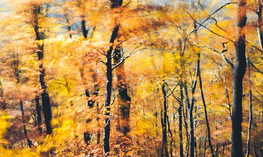 葉・植物「風が強い秋の森」:スマホ壁紙(0)