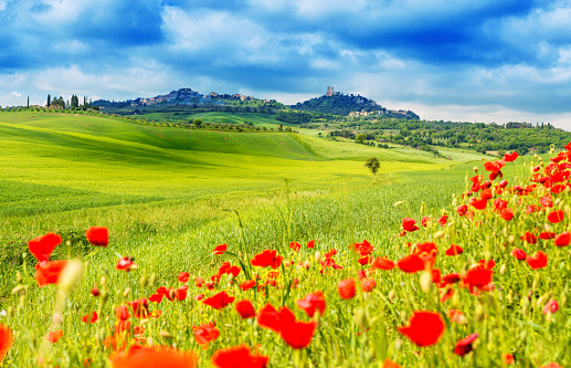 Val d'Orcia「Typical landscape of Tuscany」:スマホ壁紙(11)