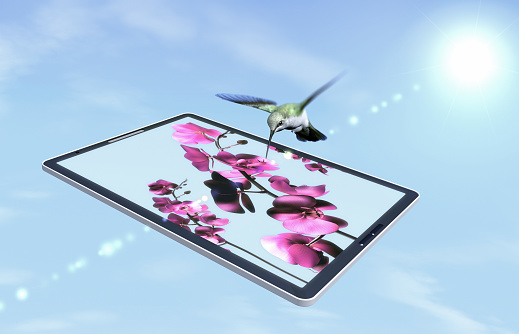 一匹「Hummingbird is flying above tablet computer」:スマホ壁紙(5)