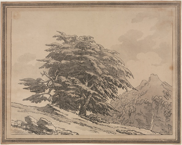 Pinaceae「Delineations Of The General Character Ramifications And Foliage Of Forest Trees: Cedar」:写真・画像(8)[壁紙.com]
