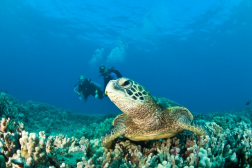 Green Turtle「Scuba divers and a Green Sea Turtle」:スマホ壁紙(5)
