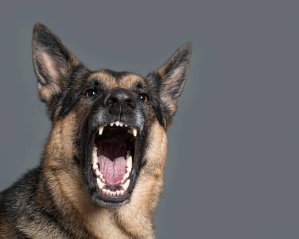 Fierce dog baring teeth:スマホ壁紙(壁紙.com)