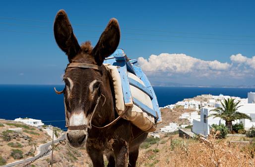 Aegean Sea「A donkey in a field; Sifnos, Cyclades, Greek Islands, Greece」:スマホ壁紙(13)