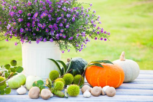 栗「Vegetables Beside Vase of Frost Aster」:スマホ壁紙(14)