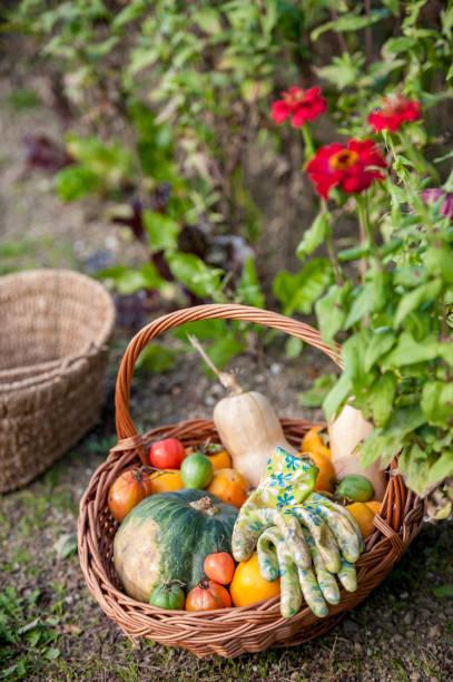 Vegetables and Garden Gloves in Basket in Garden:スマホ壁紙(壁紙.com)