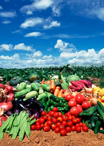 メロン「Vegetables」:スマホ壁紙(5)