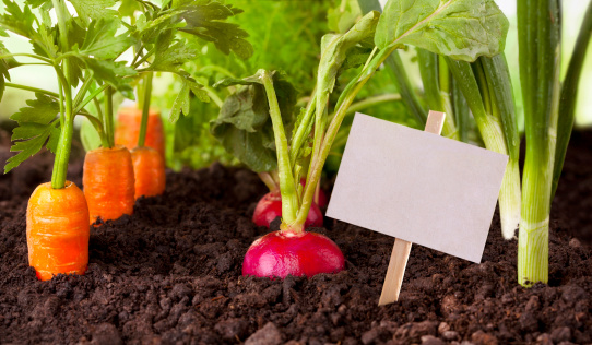 ニンジン「野菜の庭園」:スマホ壁紙(15)