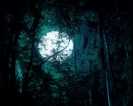 Horror「Full Moon Illuminated Through Trees」:スマホ壁紙(15)