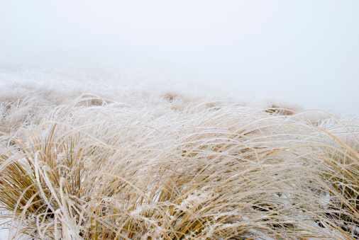 Mt Cook「Ice on Tussock Grass, New Zealand」:スマホ壁紙(7)