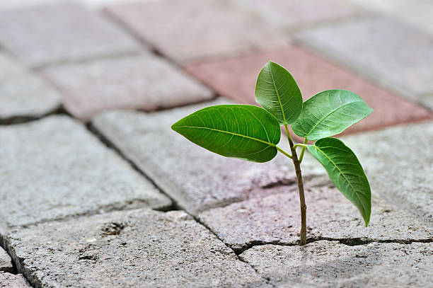 taking root:スマホ壁紙(壁紙.com)