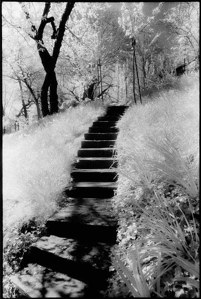 Diminishing Perspective「Steps In Dumbarton Oaks Park」:写真・画像(17)[壁紙.com]