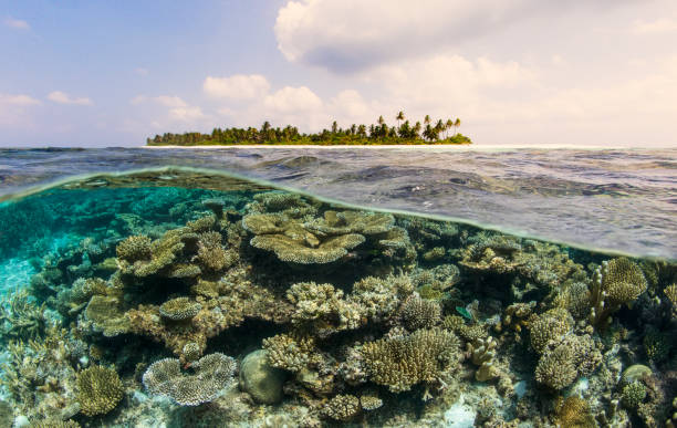 Health Coral Habitat with Various Forms in Foreground and Fully-developed Coral Atoll with Dramatic Clouds:スマホ壁紙(壁紙.com)