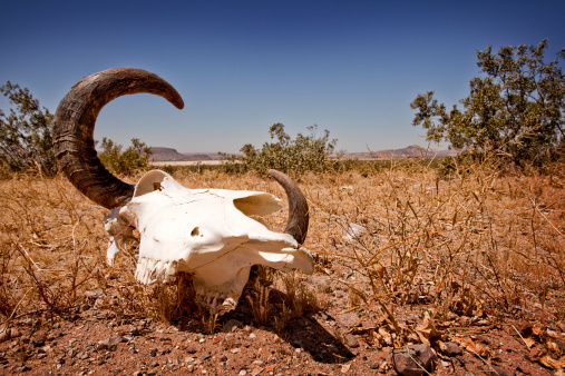 人物「Cow Skull in the Nevada Desert」:スマホ壁紙(8)