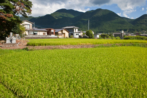 Satoyama - Scenery「Terraced rice fields」:スマホ壁紙(1)