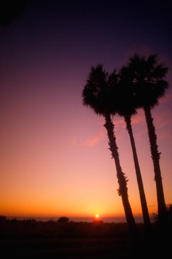 Frond「Tropical sunset」:スマホ壁紙(17)