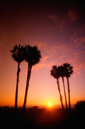 Frond「Tropical sunset」:スマホ壁紙(15)